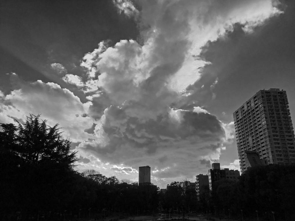 夕方のうつぼ公園バラ園